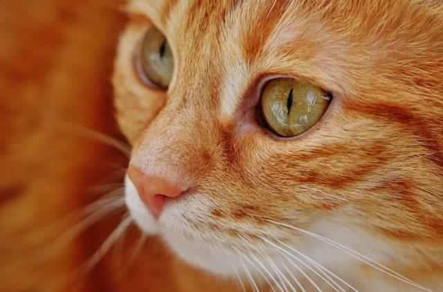 katteforsikring
